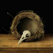 De levenscyclus (schedel meeuw) © Aad Hofman