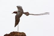Keerkringvogel © Bert Denneman