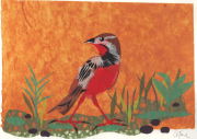 Tanzaniaanse vogel © Céline Leopold