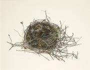 Nest © Chris Herenius