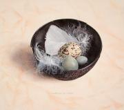 Stilleven met kom, veren en eitjes © Chris Herenius