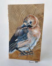 Vogelhoutje - Gaai © Claudia van de Leur