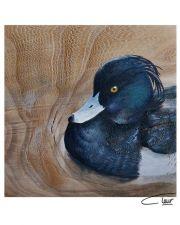 Vogelhoutje - Kuifeend © Claudia van de Leur