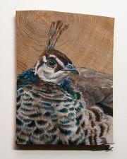 Vogelhoutje - Pauw © Claudia van de Leur