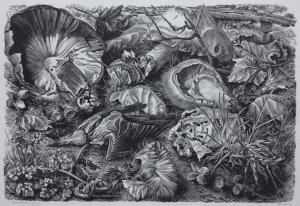 Bosgrond met paddenstoelen en vogelskelet, 1949, Dirk van Gelder