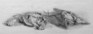 Vogelskelet, 1949, Dirk van Gelder
