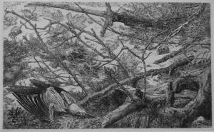 Winter (dode vogel en takken), 1978, Dirk van Gelder