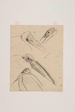 Blad met studie naar koppen van vogels, vermoedelijk pelikanen