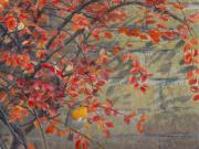 Roodborst, herfstkleuren © Elwin van der Kolk