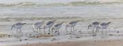 Drieteenstrandlopers op het strand © Elwin van der Kolk