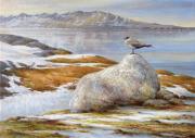 Jager op Spitsbergen © Erik van Ommen