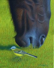 Gele Kwikstaart en paardenkop © Frits-Jan Maas