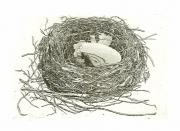 Geerts nest © Han van Hagen