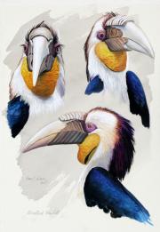 Gewone jaarvogel © Hans J. Geuze