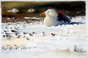 Grote mantelmeeuw © Hans J. Geuze