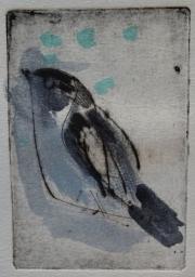 Pied flycatcher © Henk Tichelaar