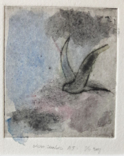 Zwaluw © Henk Tichelaar