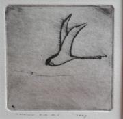 Zwaluw Narlay © Henk Tichelaar