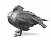 Watervogel, staand © Hetty Heyster