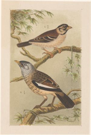 Twee vogels op takken