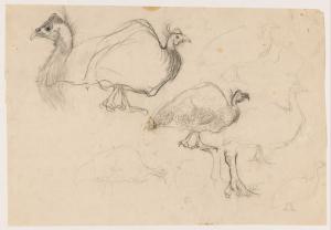 Schetsen van een parelhoen, Jan Mankes, 1900-1920