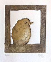 Jonge vogel © Jos van der Meer