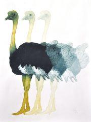 Struisvogel © Jos van der Meer