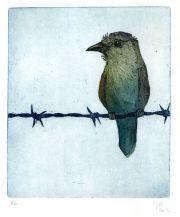 Bird on a wire © Jos van der Meer