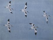 Vlucht kluten © Lidwien Chorus