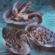 Drie zwarte zwanen © Loes Botman