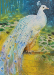 Witte Pauw © Loes Botman