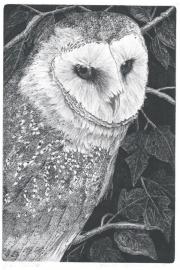 Barn owl © Marian Vergouwen