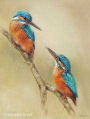 IJsvogels © Marjolein Kruijt
