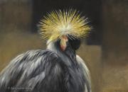 Kroonkraanvogel © Marjolein Kruijt