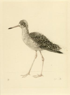 Kemphaan vrouw, Philomachus pugnax, Peter Vos, 1980