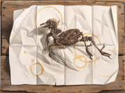 Archeopteryx Contemporalis © Rob Møhlmann