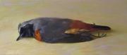 Gekraagde roodstaart © Rutger Hiemstra