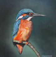 IJsvogel © Trudie Hofman