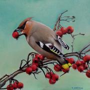 Pestvogel © Trudie Hofman