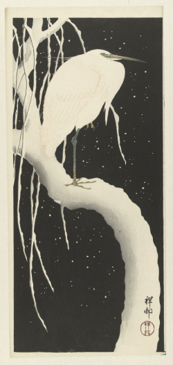 Reiger in sneeuw