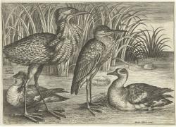 Vier waadvogels langs een oever