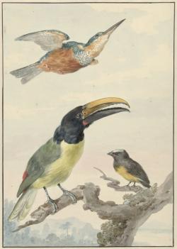 Een IJsvogel, een Prins von Wied's Toekan en een Organist