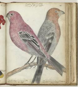 Zweedse vogels