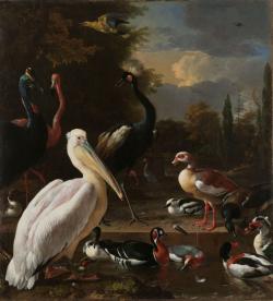 Een pelikaan en ander gevogelte bij een waterbassin, bekend als 'Het drijvend veertje'