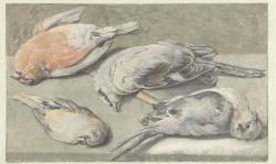 Stilleven van vier dode vogels