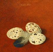 Eitjes-met-eendenveer © Wilma van der Vliet
