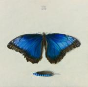 Rhapsodie in blauw © Wilma van der Vliet