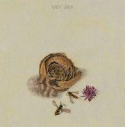 Stilleven met wespennestje © Wilma van der Vliet