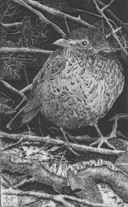 Merel, lijnets, 10 x 15 cm, Marian Vergouwen
