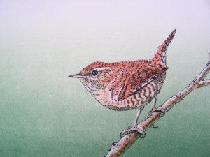 Winterkoninkje. litho, 24 x 19 cm, Lidwien Chorus